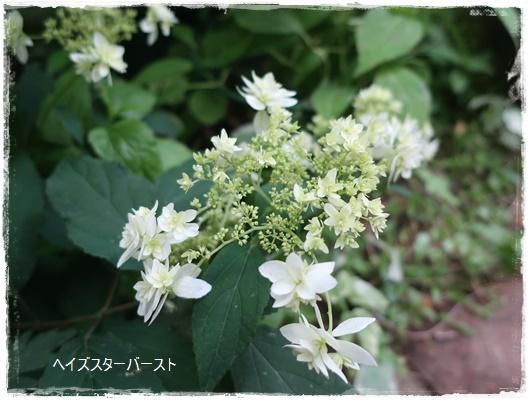 IMG_347519.jpg