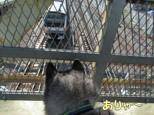 跨線橋で電車観察