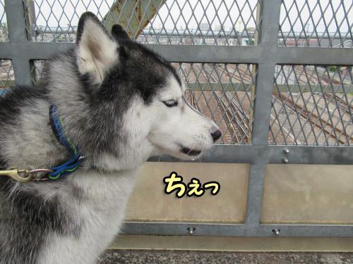 鉄犬スフレ