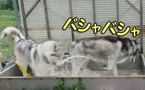 お水ぶっかけスフレ