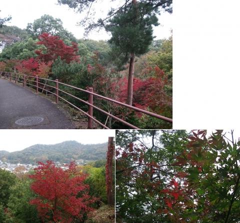 織姫山のもみじ谷(2014年11月)連結その3