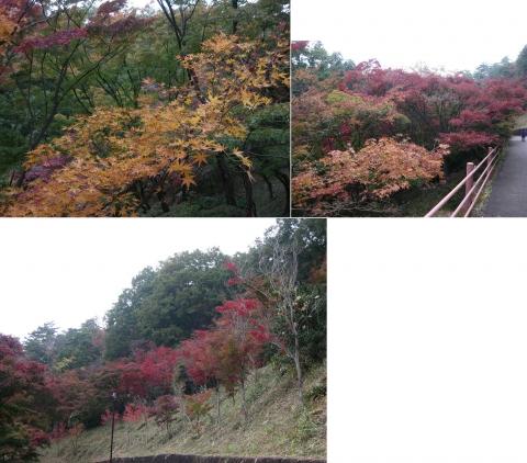 織姫山のもみじ谷(2014年11月)その6