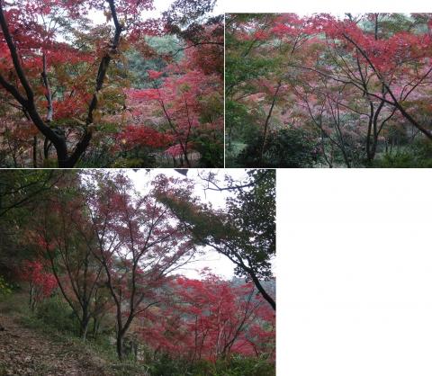 織姫山のもみじ谷(2014年11月)その11