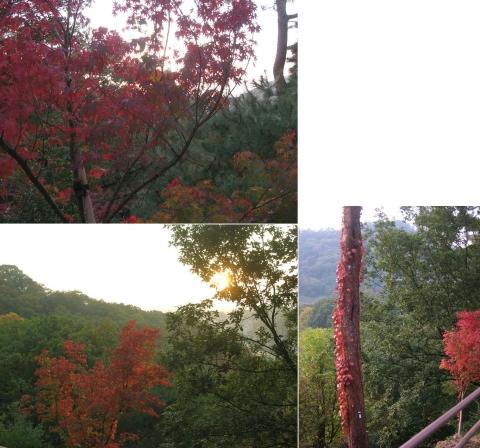 織姫山のもみじ谷(2014年11月)連結その18