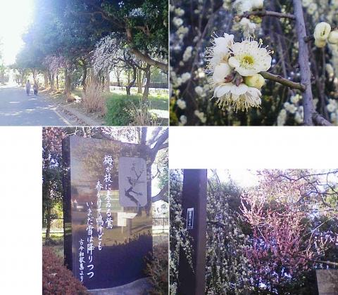大宮公園の梅園(その11)