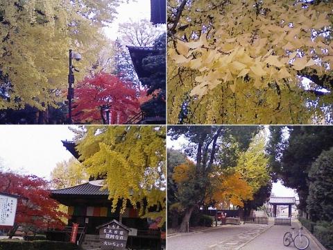 bannaji_koyo201211_03