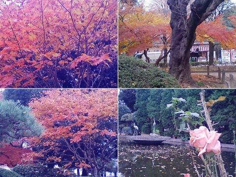 bannaji_koyo201211_06