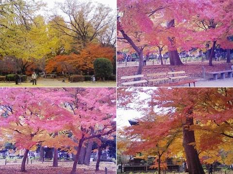 bannaji_koyo201211_07