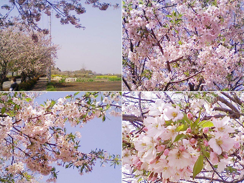 biwatuka2013_02.jpg