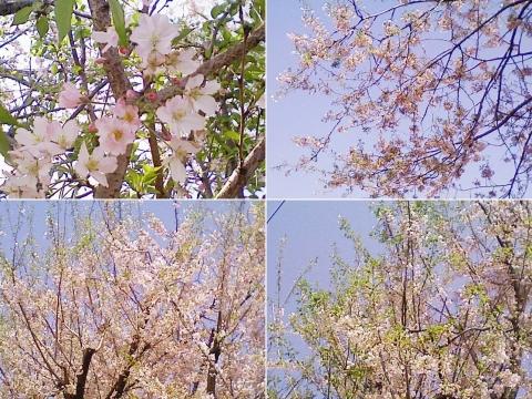 biwatuka2013_04