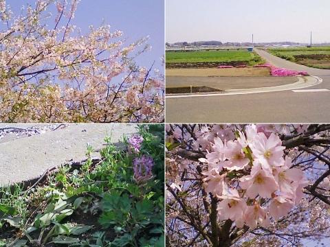 biwatuka2013_09