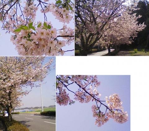 biwatuka2013_11