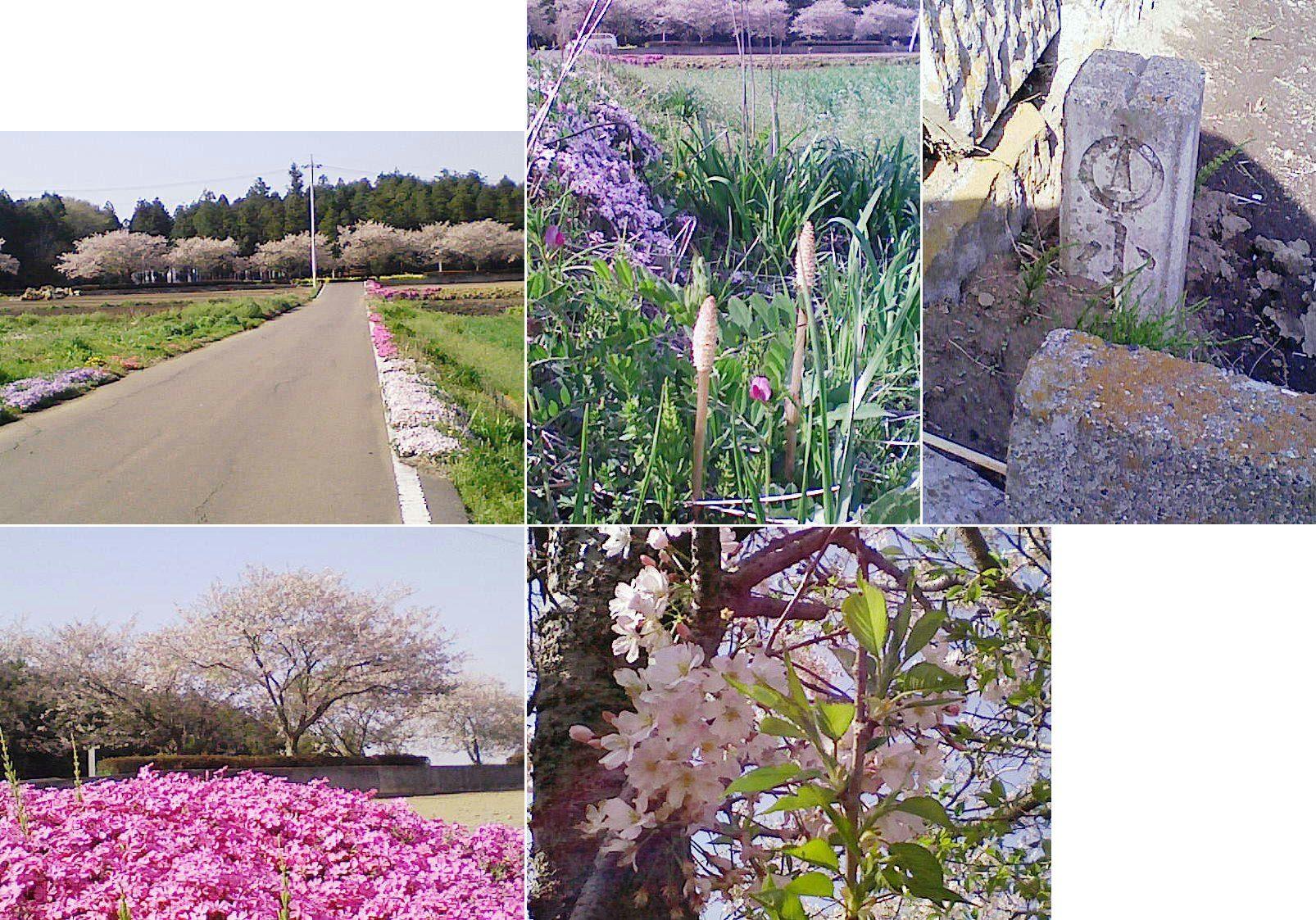 biwatuka2013_18.jpg