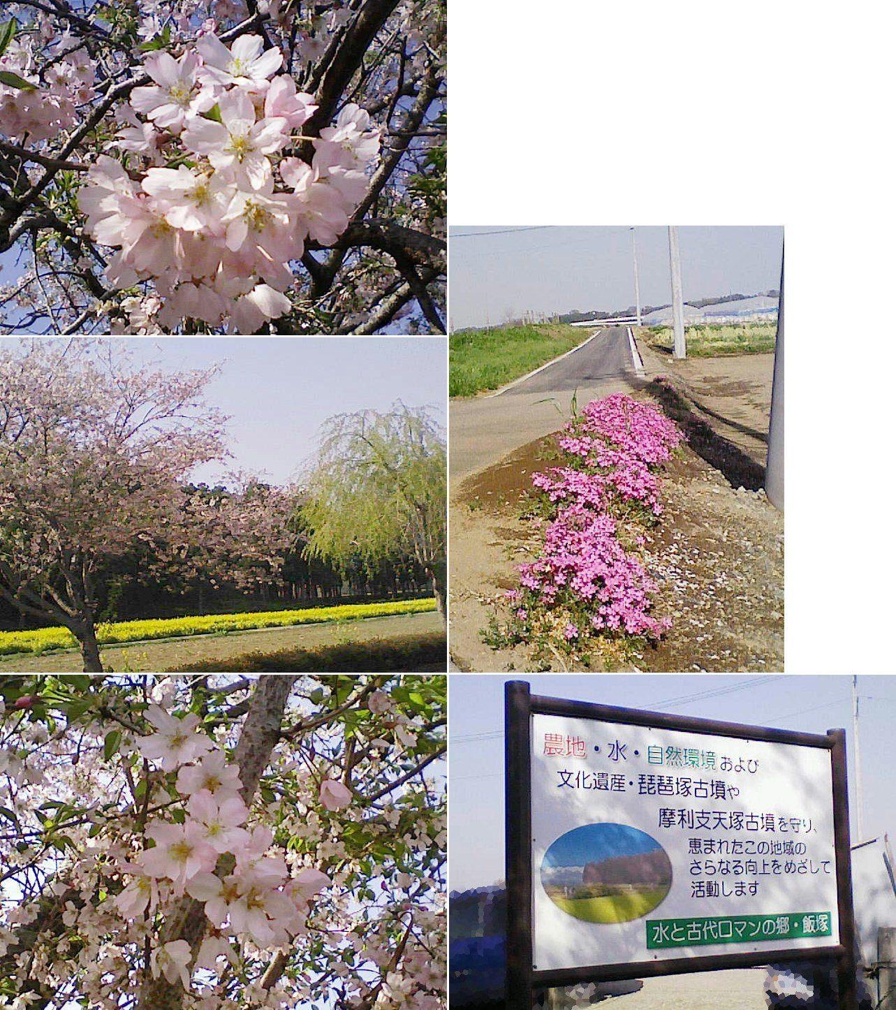 biwatuka2013_19.jpg