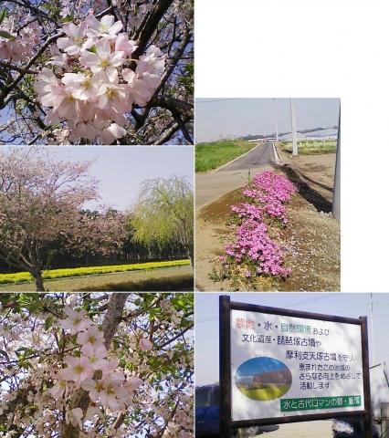biwatuka2013_19