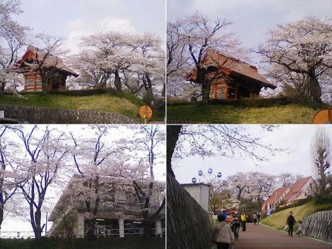 kanuma_senju2013_02