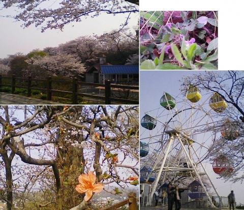 kanuma_senju2013_10