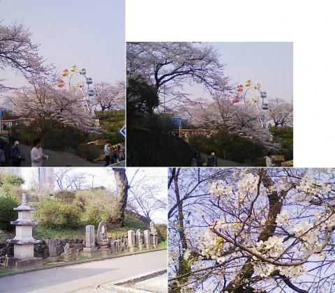 kanuma_senju2013_11