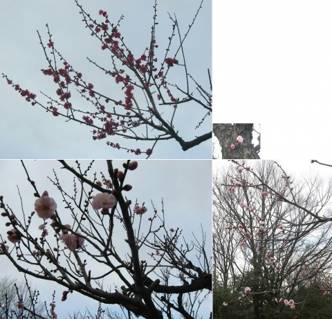 kiryu_ume2016_13