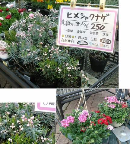 mikamo_fukuju2014_14