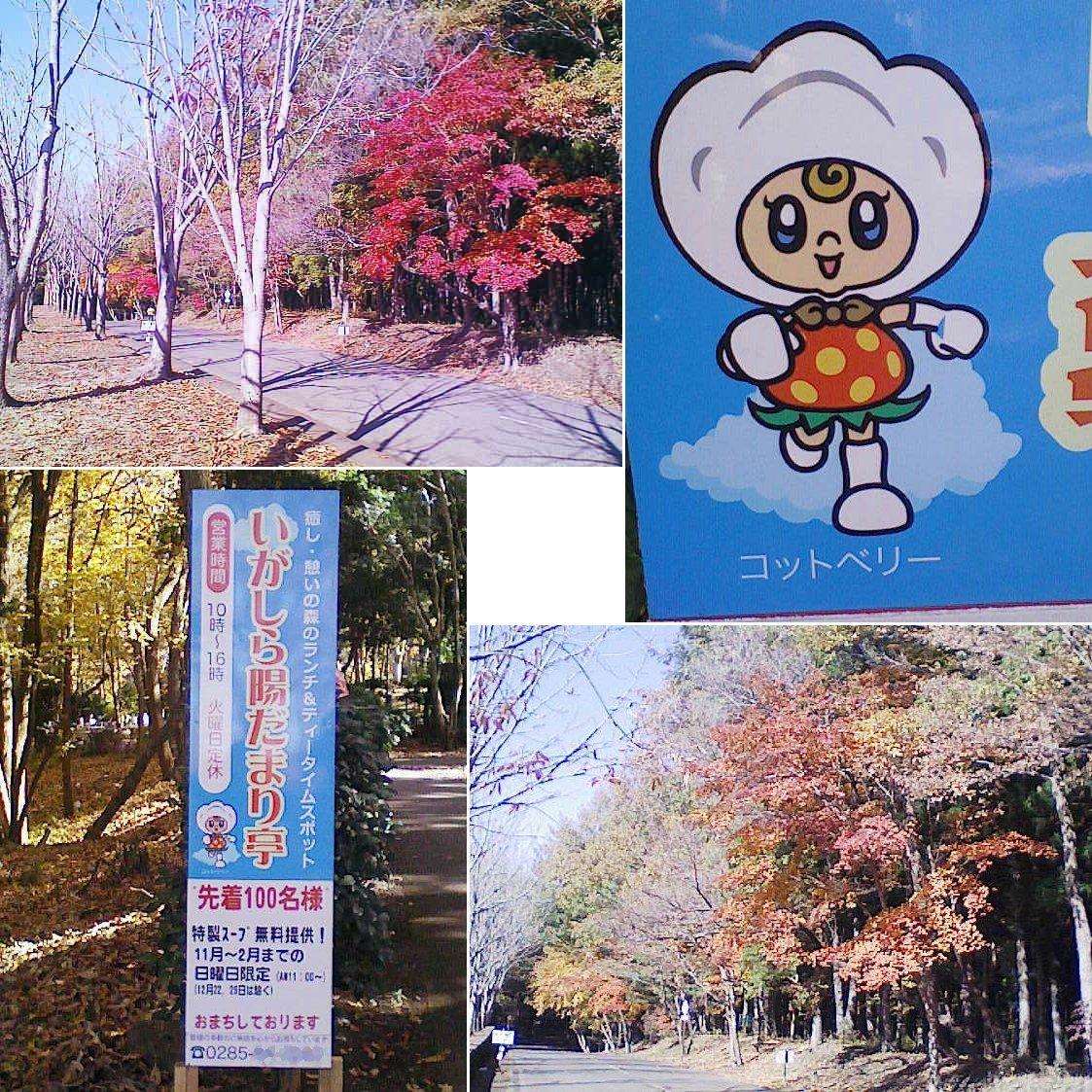 moka_igashira201311_03.jpg