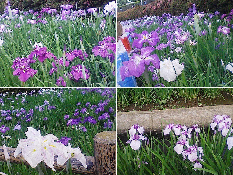 oizumi_bunsui201306_02.jpg