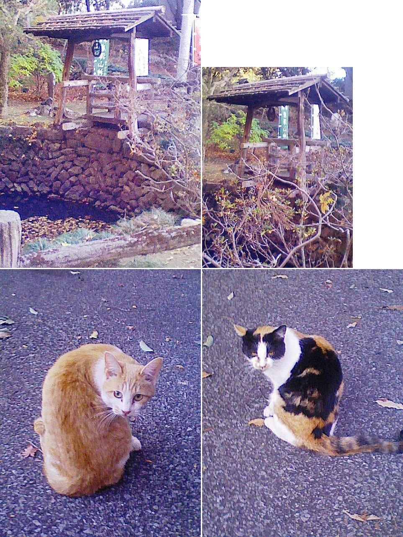 sano_karasawa201212_08.jpg
