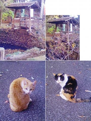 sano_karasawa201212_08
