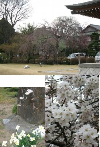 tb_zendoji201404_22