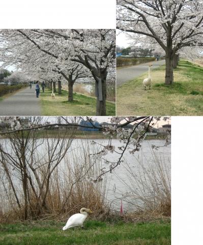 tb_zendoji201404_28