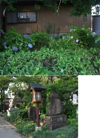 tenmaku_hasu2014_25