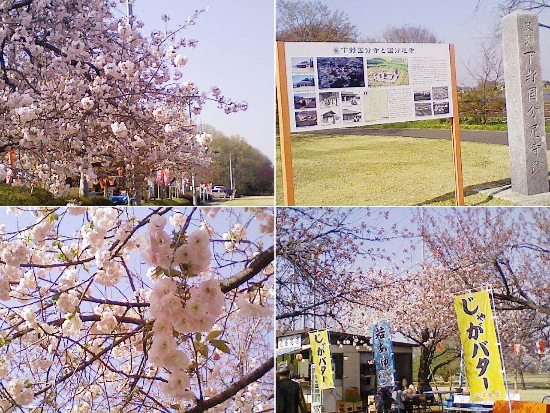tenpyo_sakura2013_02.jpg