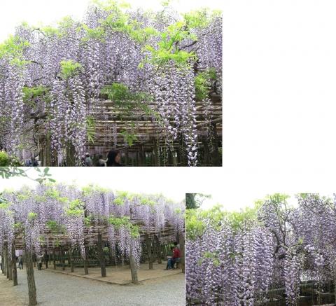 ushijima_fuji2014_10