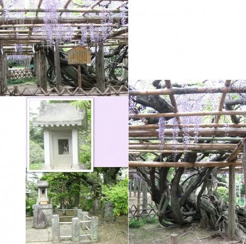 ushijima_fuji2014_11
