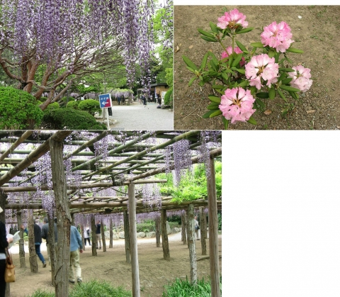 ushijima_fuji2014_12