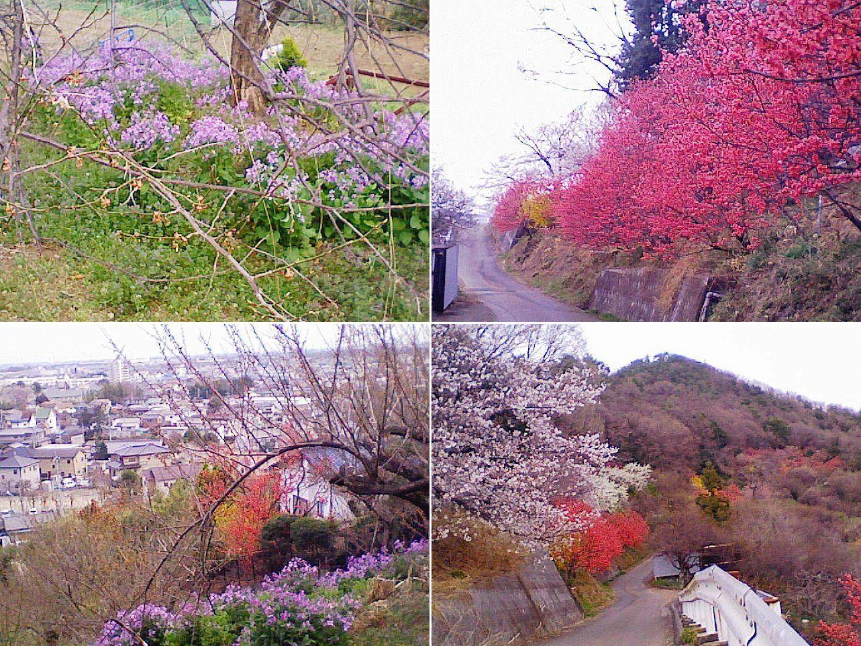 yamamae_ume201303_14.jpg