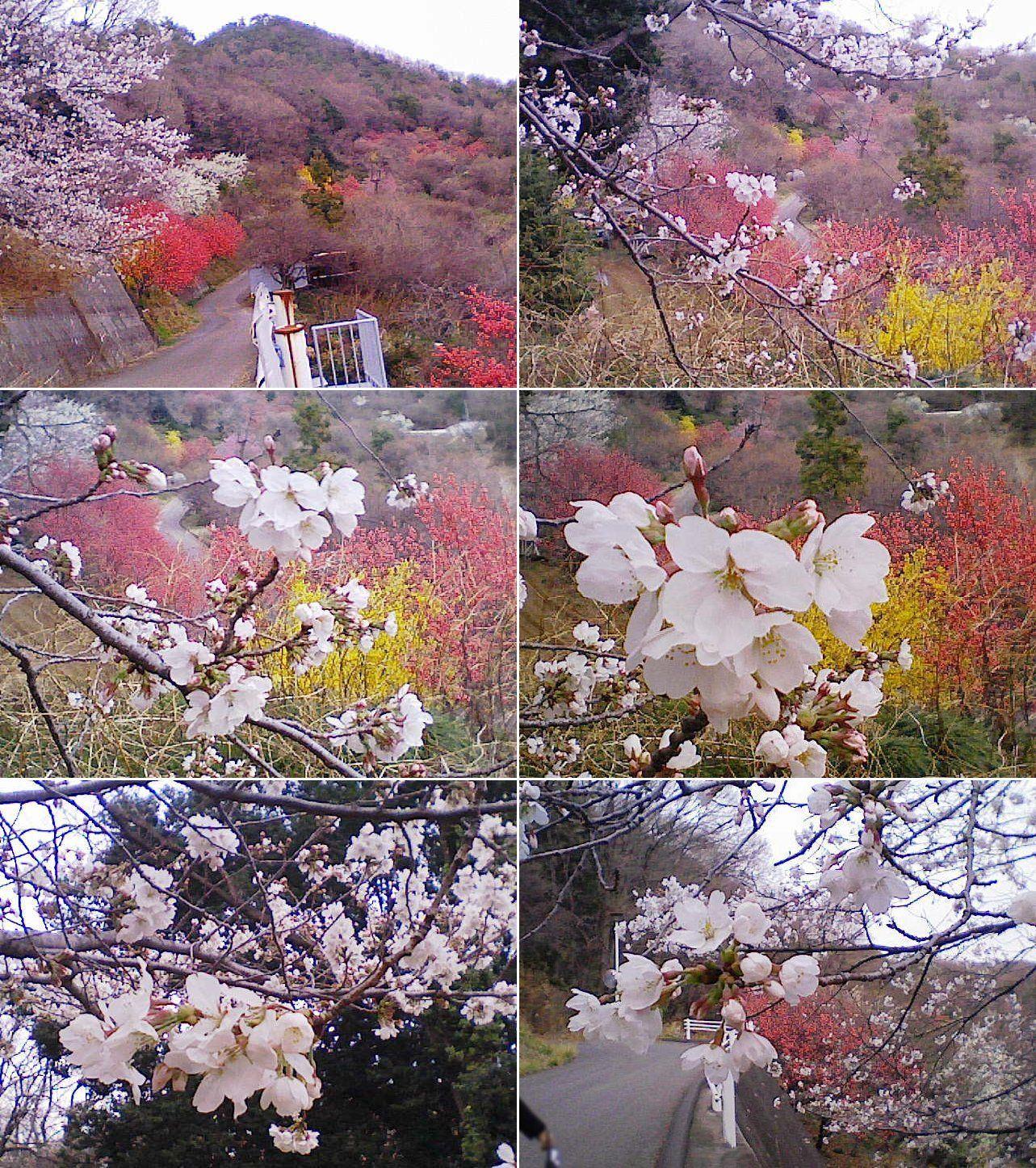 yamamae_ume201303_15.jpg