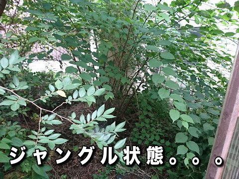 image_201904221030565f9.jpg
