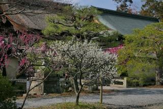 190302umemiya(16).jpg