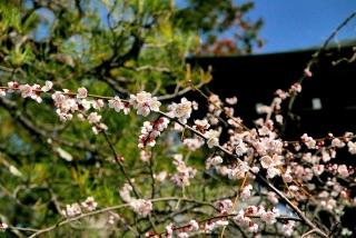 190302umemiya(4).jpg