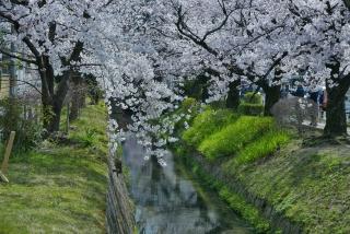 190406tetsugakunomichi(1).jpg