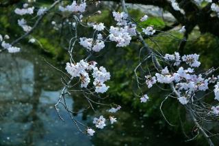 190406tetsugakunomichi(10).jpg