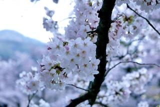 190406tetsugakunomichi(12).jpg
