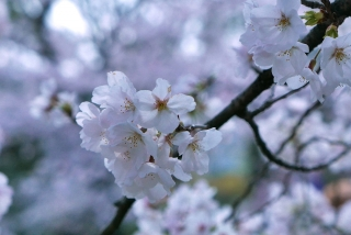 190406tetsugakunomichi(15).jpg