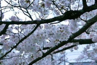190406tetsugakunomichi(16).jpg