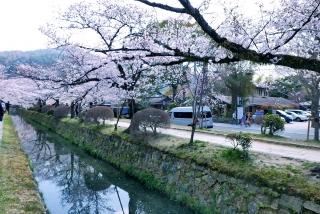 190406tetsugakunomichi(17).jpg