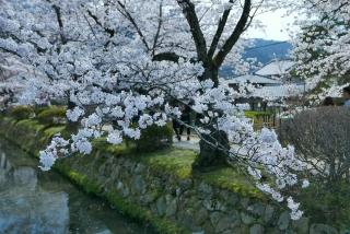 190406tetsugakunomichi(19).jpg