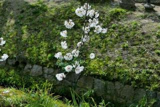 190406tetsugakunomichi(3).jpg