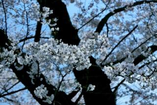 190406tetsugakunomichi(5).jpg