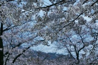 190406tetsugakunomichi(7).jpg